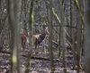 Vign_027-CT0Q0300-CHATEAUGAY-Chasse_au_gros-Photosdechasse_com-