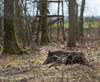 Vign_065-CT0Q0489-CHATEAUGAY-Chasse_au_gros-Photosdechasse_com-