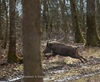 Vign_067-CT0Q0492-CHATEAUGAY-Chasse_au_gros-Photosdechasse_com-
