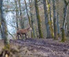 Vign_111-CT0Q0714-CHATEAUGAY-Chasse_au_gros-Photosdechasse_com-